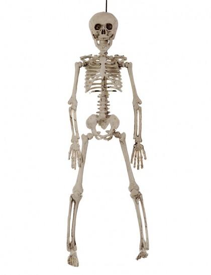 Squelette deco